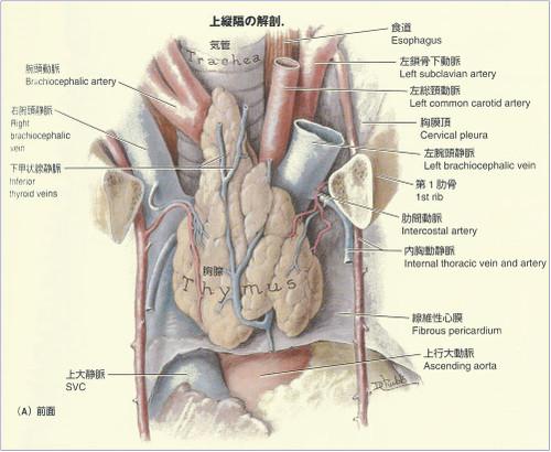 Anathyroid