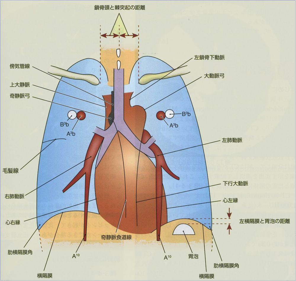 胸膜 尖 肥厚 肺 両